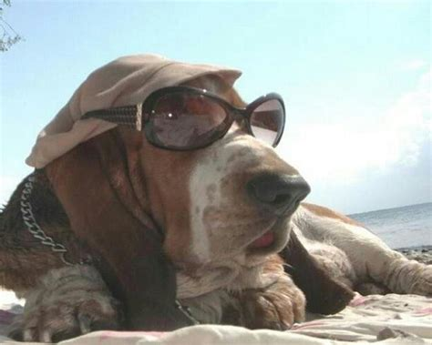 Funny Animals Wearing Glasses Photo Gallery - Third Monk