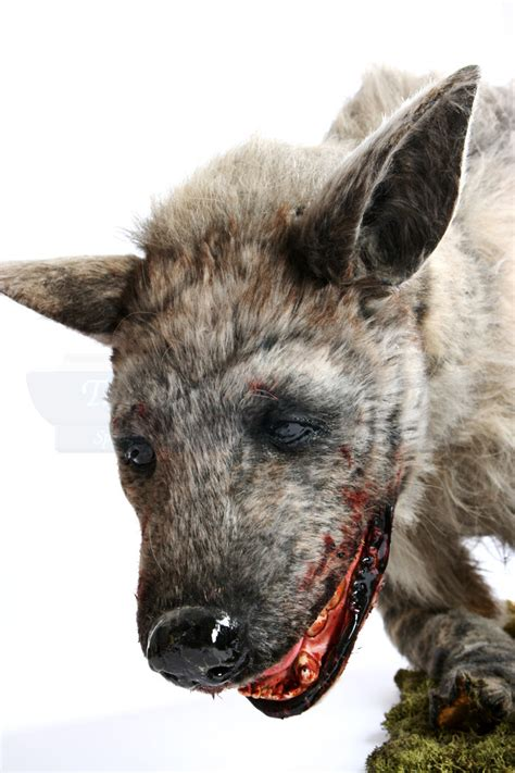 Bloody Hyena Puppet   Prop Store - Ultimate Movie Collectables