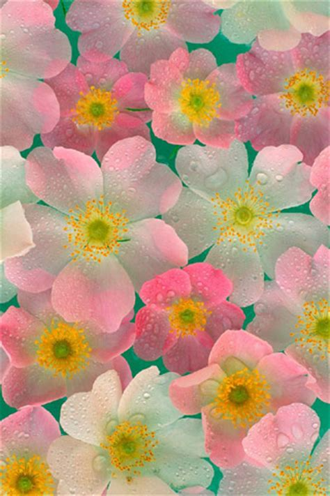 Free iPhone Wallpapers to Download for Spring 2011 with