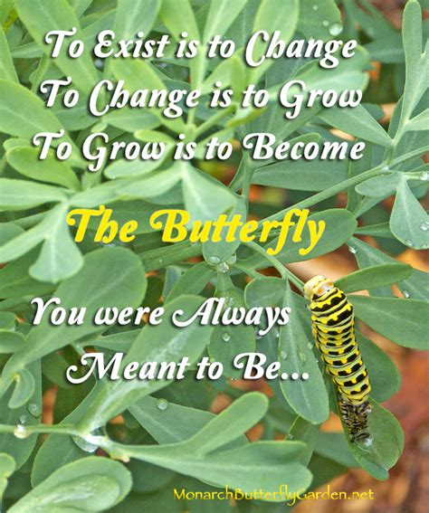 Quotes About Growth And Transformation